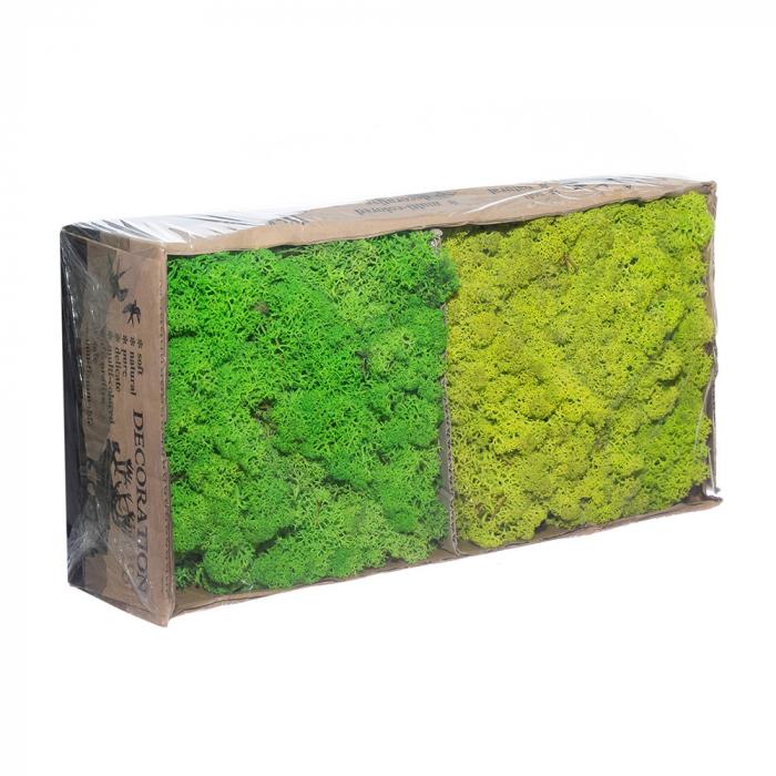 Licheni bicolor verde - verde deschis [0]