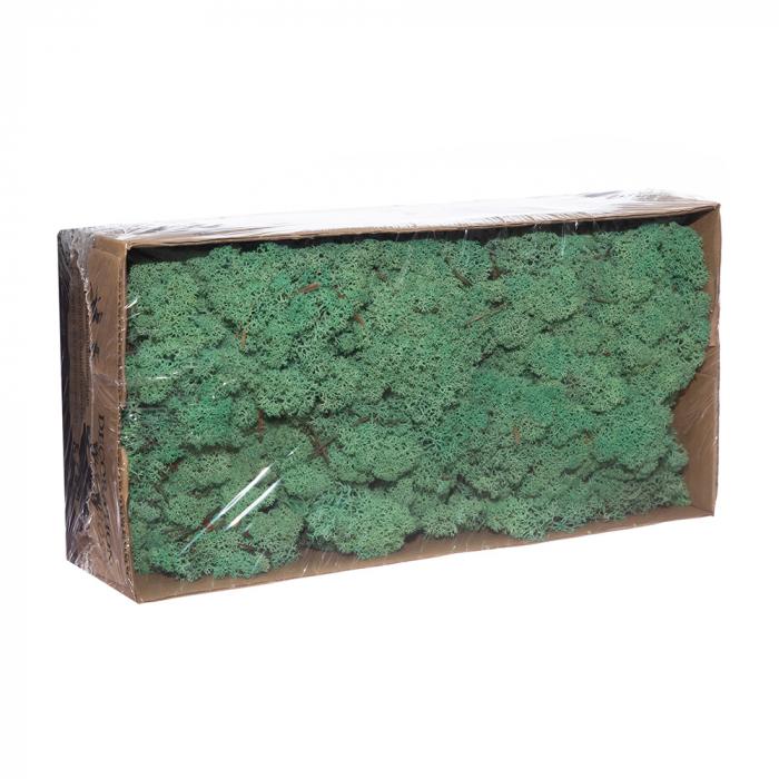 Licheni pacific green [0]