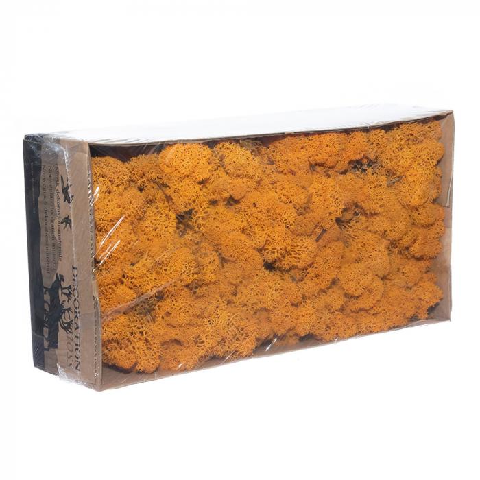 Licheni orange [0]