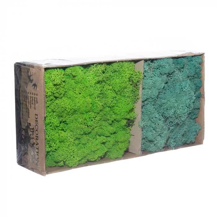 Licheni bicolor verde - turcoaz [0]