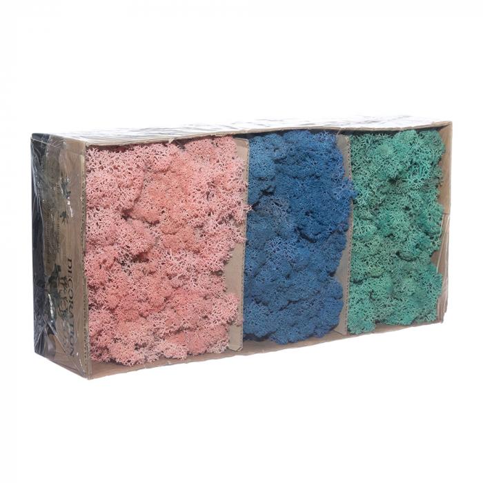 Licheni trio albastru [0]