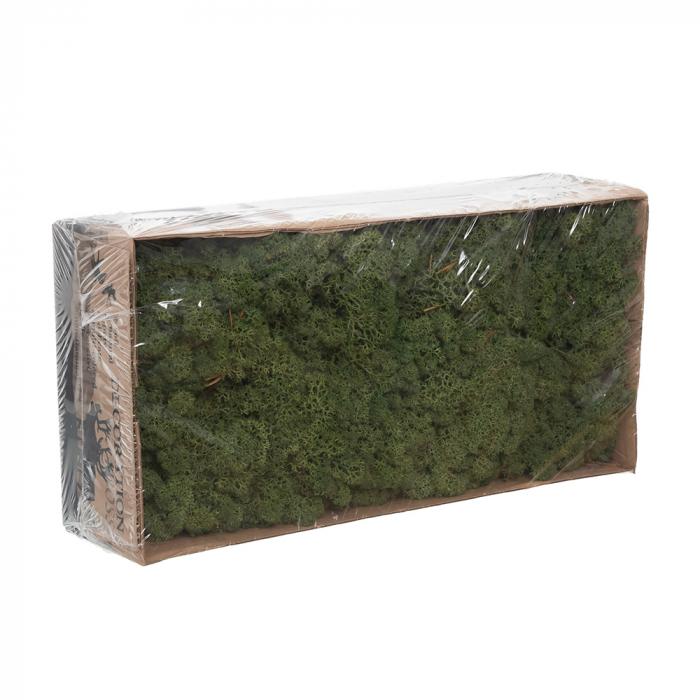 Licheni verde inchis [0]