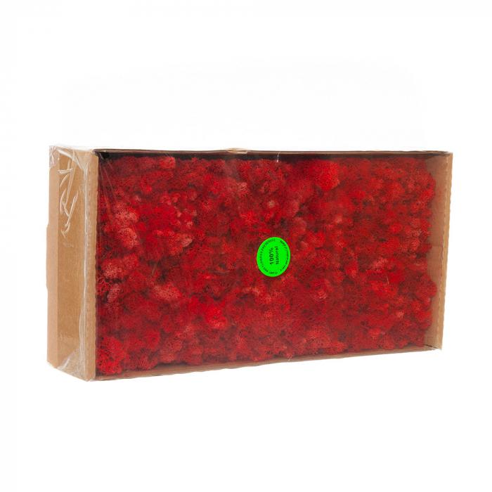 Licheni rosii [0]