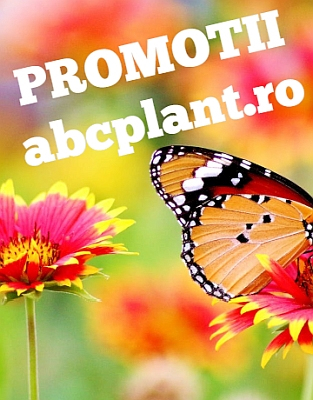 baner  alimente naturale  abcplant.ro