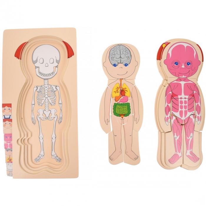 Puzzle din lemn în straturi Anatomia Corpului uman - FATĂ [4]