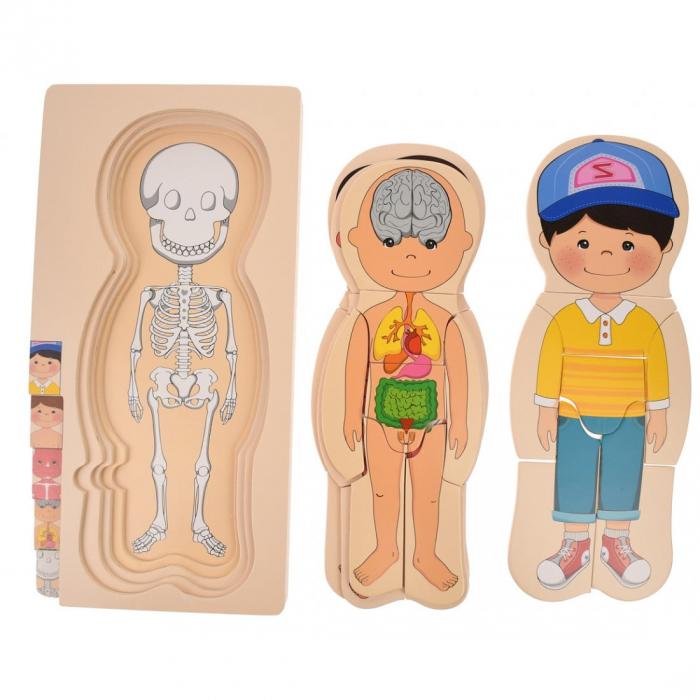 Puzzle din lemn în straturi Anatomia Corpului uman - BĂIAT [4]