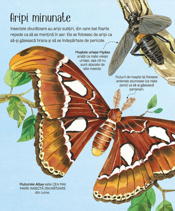 Marea carte a fluturilor si a altor insecte (Usborne) [1]