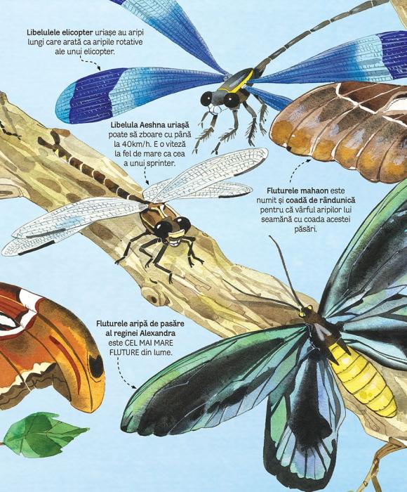 Marea carte a fluturilor si a altor insecte (Usborne) [2]