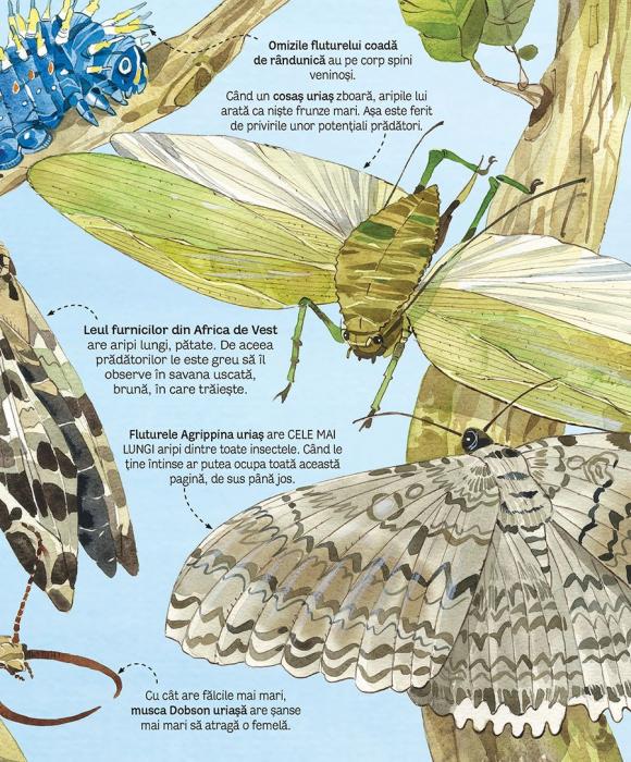 Marea carte a fluturilor si a altor insecte (Usborne) [4]