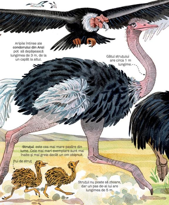 Marea carte a animalelor (Usborne) [4]