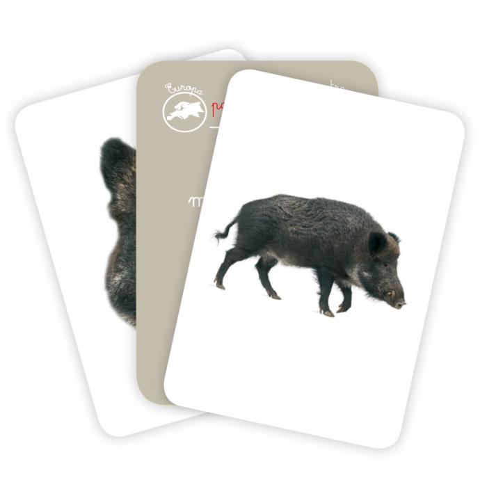 Cărți de joc Montessori -Asocieri ANIMALE [1]