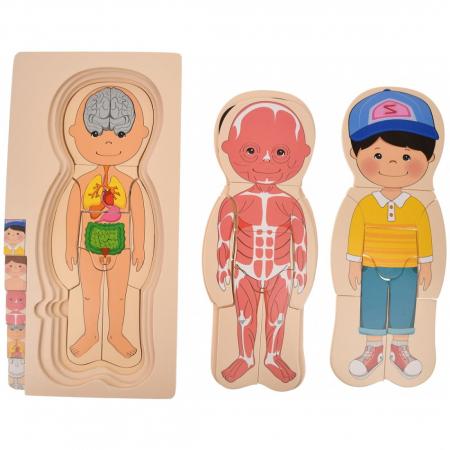 Puzzle din lemn în straturi Anatomia Corpului uman - BĂIAT [3]