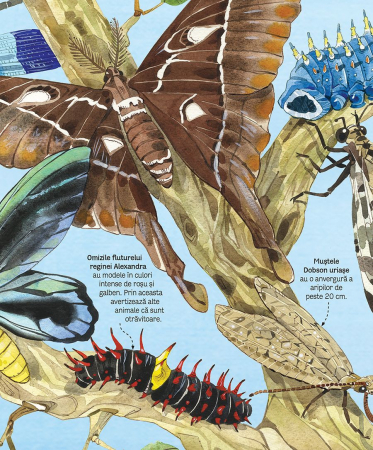Marea carte a fluturilor si a altor insecte (Usborne) [3]