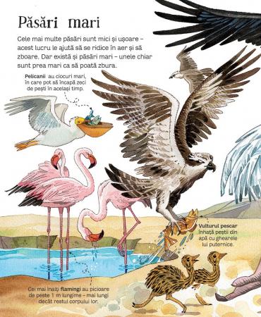 Marea carte a animalelor (Usborne) [3]