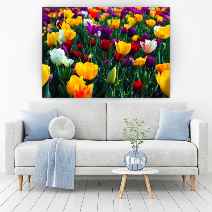 Tablou Canvas - Colorful Tulips [1]