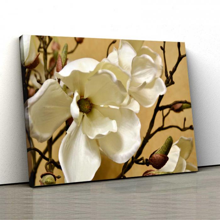 Tablou Canvas - Floare Alba [0]