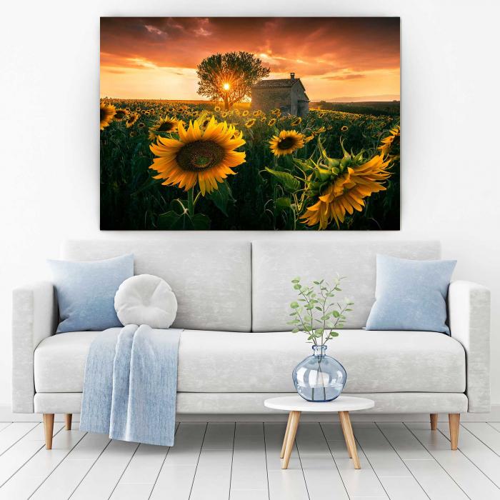 Tablou-canvas-floral-floarea-soarelui 1