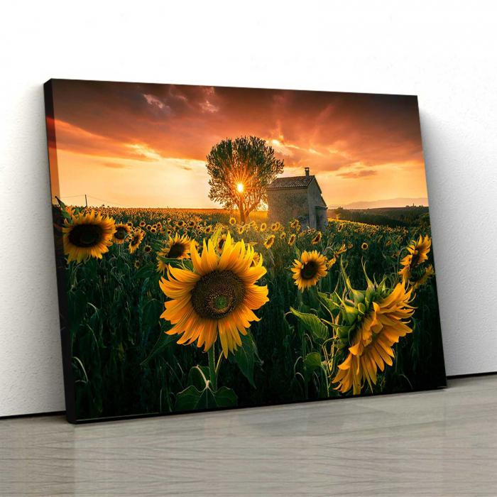 Tablou-canvas-floral-floarea-soarelui 0