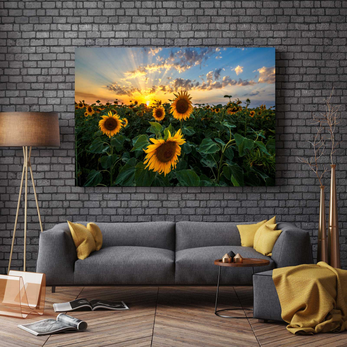 Tablou Canvas - Sunflower Field 2