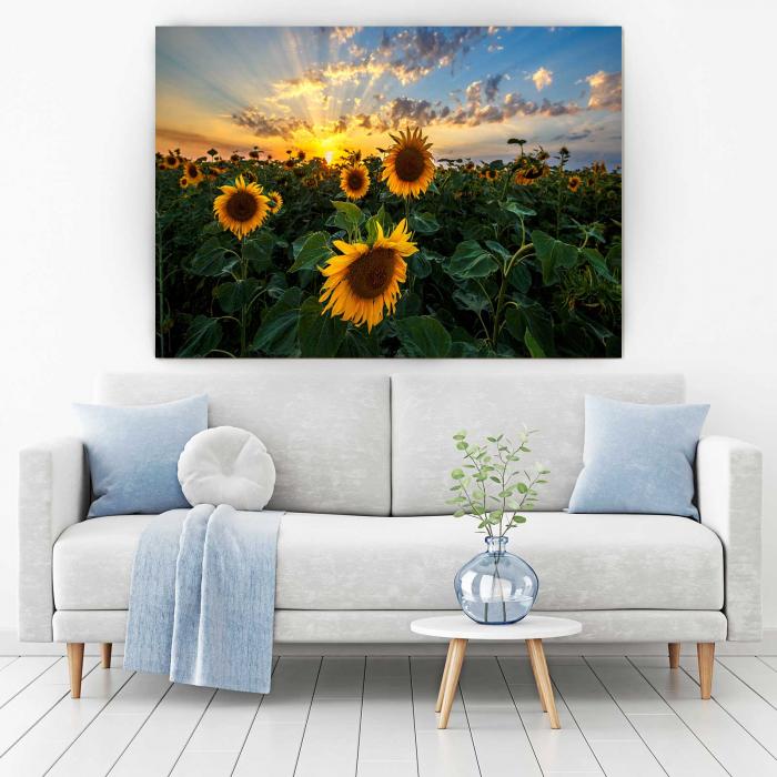 Tablou Canvas - Sunflower Field 1