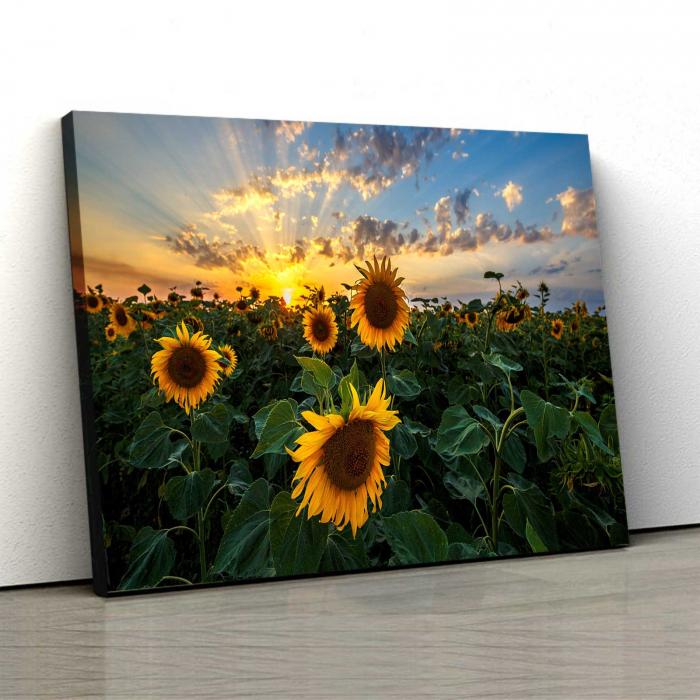 Tablou Canvas - Sunflower Field 0