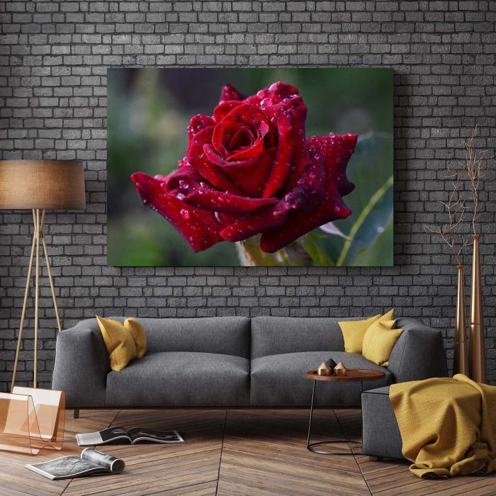 Tablou Canvas - Trandafir Rosu [2]