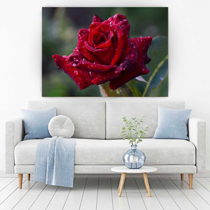 Tablou Canvas - Trandafir Rosu [1]