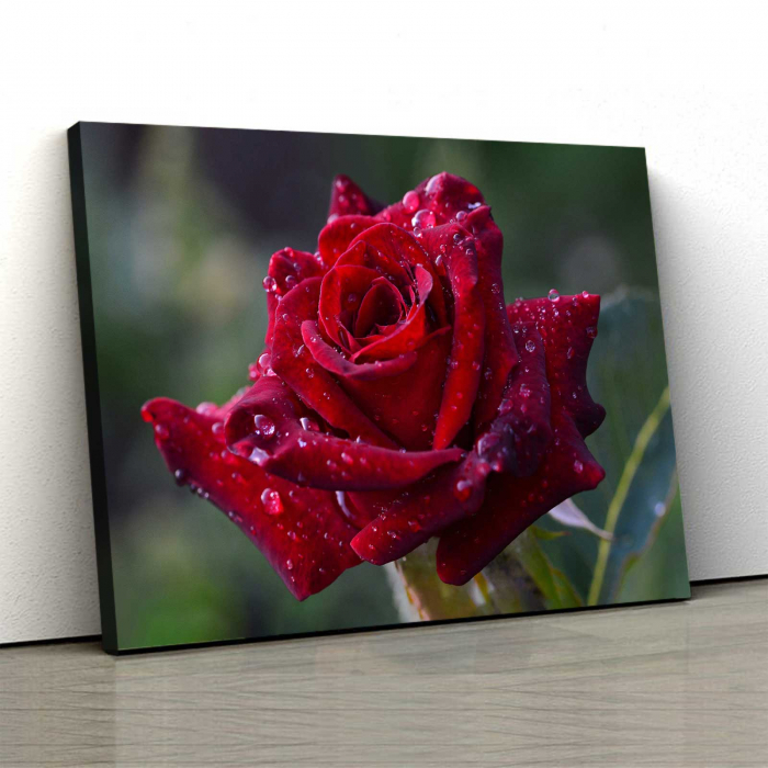 Tablou Canvas - Trandafir Rosu [0]