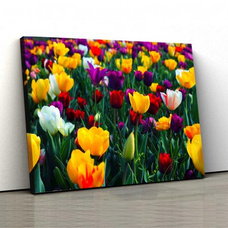 Tablou Canvas - Colorful Tulips [0]