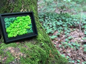Tablou cu licheni naturali - diverse modele 37x37 cm [4]