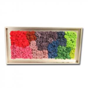Tablou cu licheni naturali - diverse modele 61x31 cm [1]