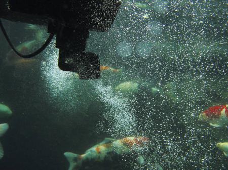 Skimmer plutitor SwimSkim 509