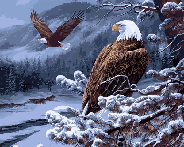 Picturi pe numere adulti - Vulturi 0