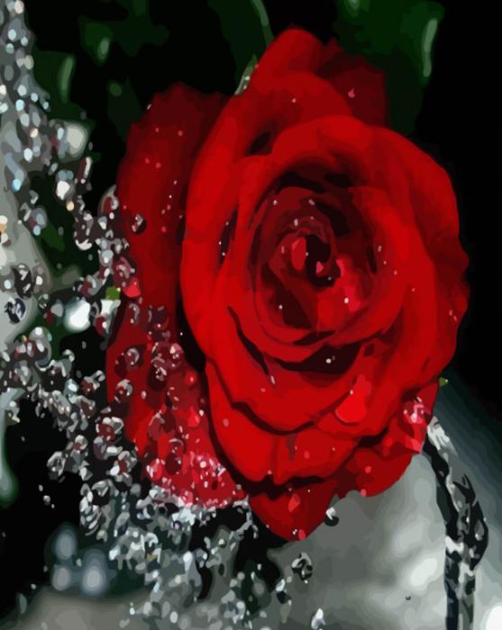 Picturi pe numere adulti - trandafir rosu 0