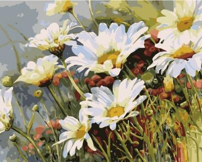 Picturi pe numere - Margarete - (40 x 50 cm)