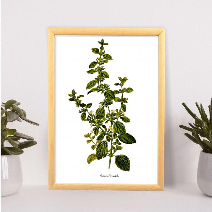 roinita desen botanic vintage [1]