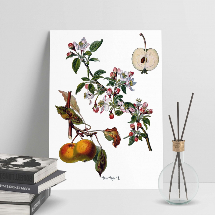 Mar, desen botanic clasic, fructe de tomana, desen vintage 5