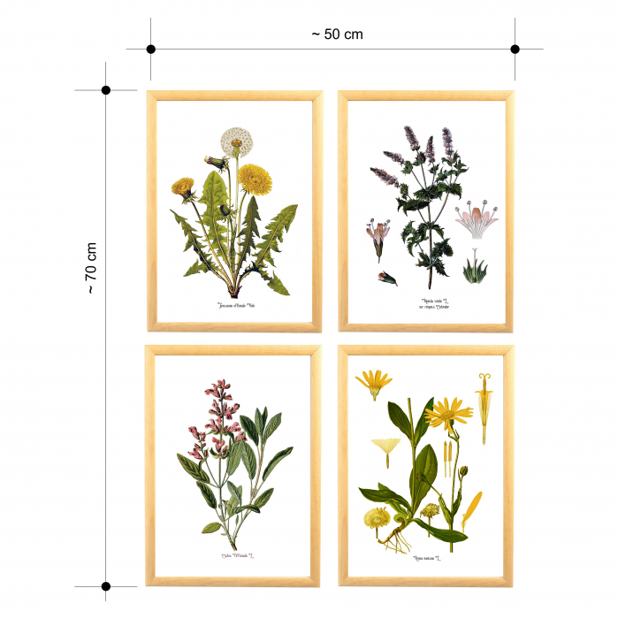 Set 4 tablouri Plante Medicinale, Papadie, Menta, Salvia, Arnica 5