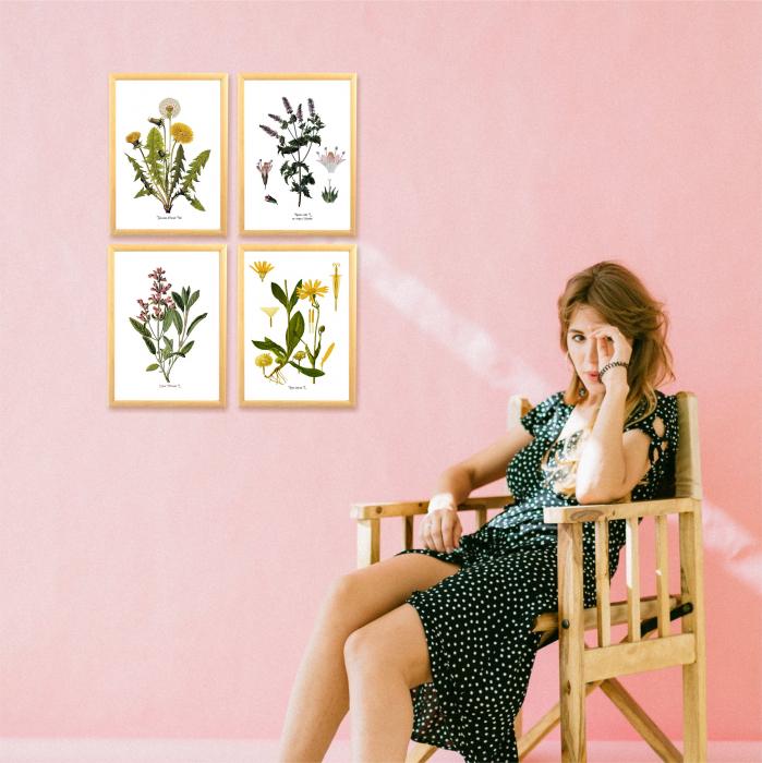 Set 4 tablouri Plante Medicinale, Papadie, Menta, Salvia, Arnica 6