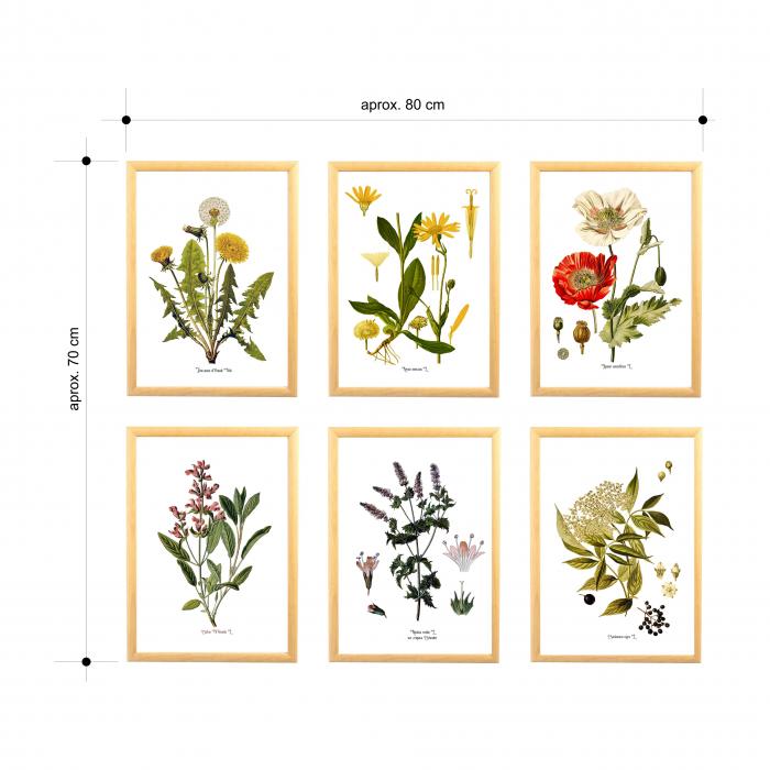 Set 6 tablouri, Papadie, Menta, Mac, Soc, Salvia, Arnica 8