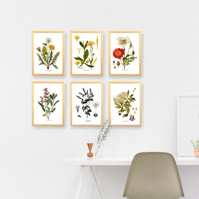 Set 6 tablouri, Papadie, Menta, Mac, Soc, Salvia, Arnica 10