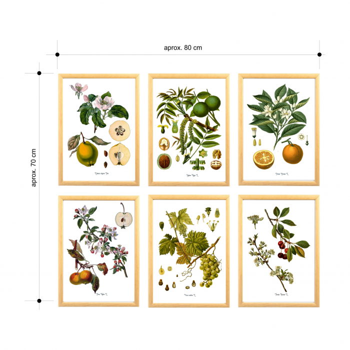 Set 6 tablouri, Portocala, Strugure, Cires, Mar, Gutuie, Nuca 7
