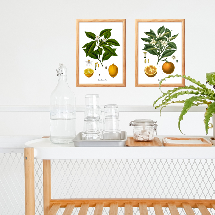 Set 2 Tablouri Citrice, Portocala, Lamaie, print ilustratie botanica clasica 5