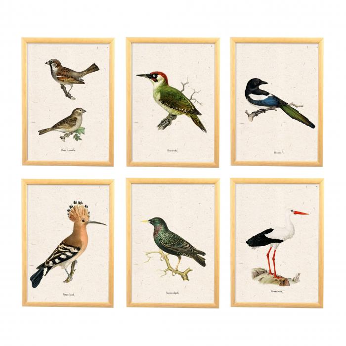 Set 6 tablouri cu Pasari, Vrabia, Ciocanitoarea, Pupaza, Cotofana, Graurul si Barza [0]