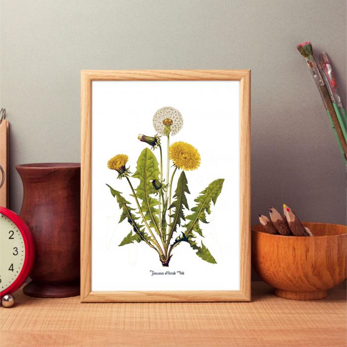 Papadia, desen botanic clasic, ilustratie cu flori de camp, 5