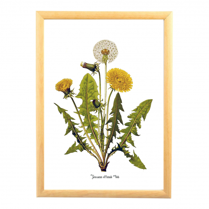 Papadia, desen botanic clasic, ilustratie cu flori de camp, 0