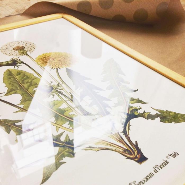 Papadia, desen botanic clasic, ilustratie cu flori de camp, 1