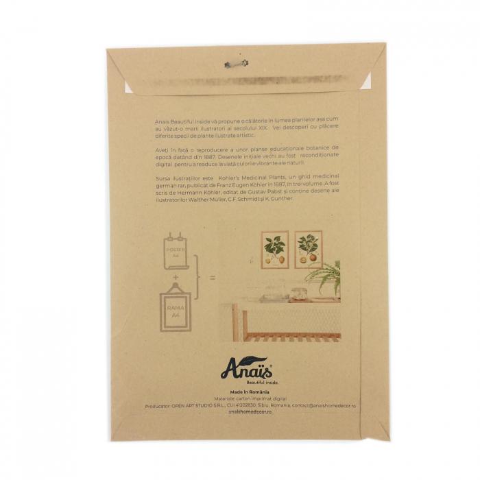 Set 2 Tablouri Citrice, Portocala, Lamaie, print ilustratie botanica clasica 9