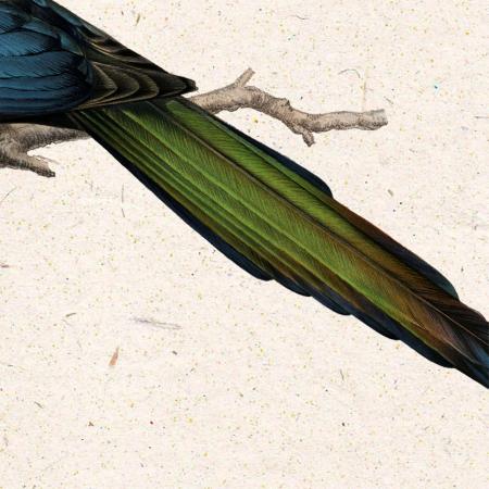 Cotofana, ilustratie vintage cu pasari4