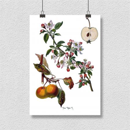 Mar, desen botanic clasic, fructe de tomana, desen vintage4